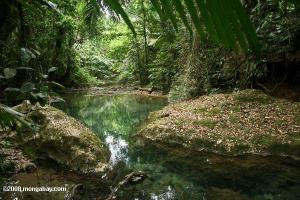 Floresta Tropical Belize