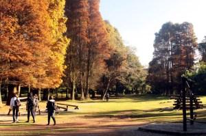 horto_florestal_caiopimenta